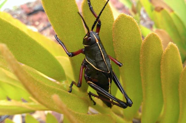 UltraPixel-grasshopper