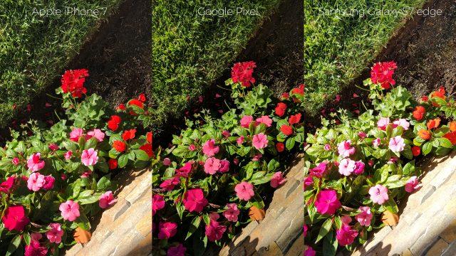 pixel-camera-versus-iphone7-galaxys7edge-flowers